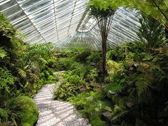 """Ascog Hall Fernery - Todea Barbara or """"the thousand year old fern"""", is said to be the oldest fern in the United Kingdom."""