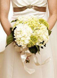 Hortensien in grün und weiß