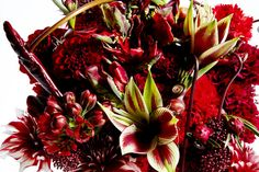 japanese flower designer azuma makoto