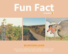 Burgenland - bis in die waren Gänse fixer Bestandteil des regionalen Ortsbilds. Burgenland - until the geese were a fixed component of the regional townscape/ picture of a town. Regional, Austria, Fun Facts, 1960s, Dogs, Pictures, Travel, Places, Photo Illustration