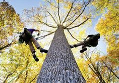 Tree climbing the right way, I have done this before but I would do anything to get to climb again someday, and maybe even get my own gear