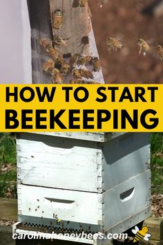 Keeping bees is a wonderful hobby. Prepare yourself for an exciting journey into the world of the honey bee. Learn how to start beekeeping today. #carolinahoneybees