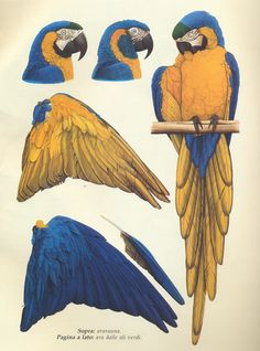 I love Elizabeth Butterworth's work!  I also love that she put a Blue Throat in there:)