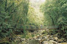 Minnamurra Rainforest, Wollongong
