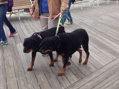 Double the fun! These pups had a wonderful time at Boardwalking for Pets in Ocean City, MD!