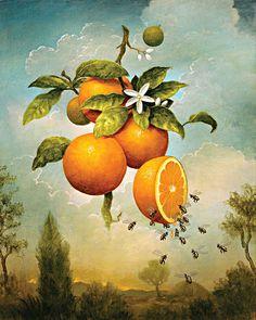 "Saatchi Art Artist: Kevin Sloan; archival pigment print 2014 Printmaking """"Abundance: Oranges"" limited edition print of 75, LARGE SIZE, 12 sold"""