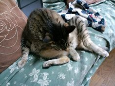 Today's cat on 30th Apr. 2012 by ganchan2, via Flickr
