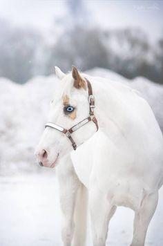 cw snow queen © Majken soelberg