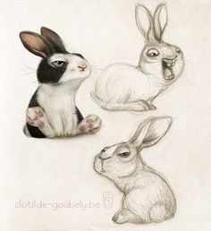 Rabbit on Behance                                                       …                                                                                                                                                                                 More