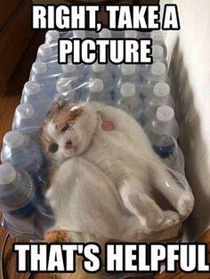 Qué risa!! Pobre gatito...qué pinche dueño tan culero tiene!