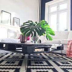 Achja,die liebe Sonne ist da und mal wieder Licht-️ Und die Monstera macht sich dabei auch nicht so schlecht  #couchtischkonfetti #decoration #germaninteriorbloggers #grünzeug #hafen #Hamburg #hh #hhomeinspo #hltips #home #homedetails #homeinspo #homesweethome #Ikea #inspohome #instahome #interieur #interieurblogger #interior #interiordesign #livingroom #meinikea #monstera #plants #saturday #sunny #wohnkonfetti