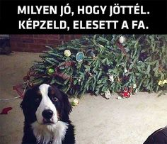 Dog Shaming Christmas Tree Fainted - Friday Frivolity - Holiday Cheer, One Way or Another - Christmas Memes + LINKY for all things Fun, Funny, Happy & Hopeful! I Love Dogs, Puppy Love, Cute Dogs, Funny Animal Pictures, Funny Animals, Cute Animals, Animal Pics, Funny Animal Humor, Animal Captions