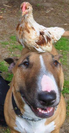 I;m..........feelin just a little......... hen pecked.........