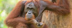 Chris Weston Filmmaking, Safari, Photographers, Wildlife, Top, Animals, Cinema, Animales, Animaux