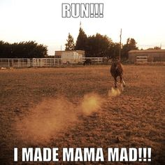 The post Bullet! appeared first on Gag Dad. - Art Of Equitation Funny Horse Memes, Funny Horse Pictures, Funny Horses, Cute Horses, Horse Love, Beautiful Horses, Horse Humor, Funny Memes, Horse Girl