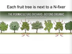 HOW TO MAKE A LIVING FROM A 4 ACRE PERMACULTURE FARM