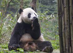Tai Blowing Us Farewell Kisses by bow'tai'ed, via Flickr