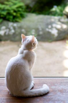「猫 後ろ姿」の画像検索結果