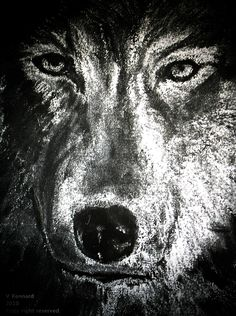 Wolf Face = Chalk on Black Board by Vincent Kennard
