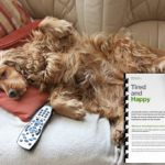 Keep your dog tired and happy with behaviourist and dog trainer Karen Wild