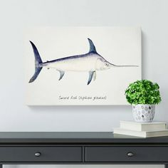 East Urban Home 'Illustration of a Swordfish' by F.E. Clarke - Wrapped Canvas Painting Print   Wayfair.co.uk Xiphias Gladius, Canvas Material, Painting Prints, Wrapped Canvas, Illustration, Wall Art, Frames, Design, Urban