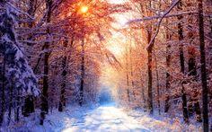 Immagine della natura nel tempo gelido inverno si avvicina il nuovo anno.