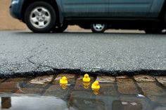 on a rainy day put rubber duckies in puddles. what a great way to help people smile!