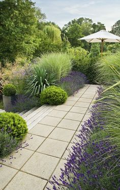 Pour l'allée entre le portail et la maison : Lavenders, Silver Spears, Pittosporum and grasses make for a lush, but low water landscape in a difficult area