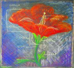 botany chalk drawing