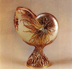 Carved Nautilus Shell - Bing images