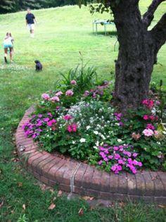 Tree Flower Bed : Tree ring on Pinterest  Trees, Planting Flowers and Flower Beds