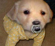 Puppies In Pajamas 104 - meowlogy Sweet Dogs, Cute Baby Dogs, Cute Little Puppies, Cute Dogs And Puppies, Baby Puppies, Cute Baby Animals, Funny Animals, Dog Baby, Sleepy Animals