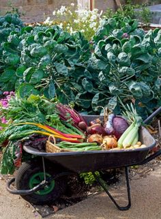 garden bounty harvest