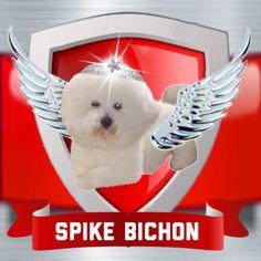 #spikebichon