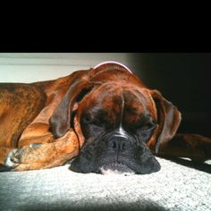#boxer #dog smooshy flub.