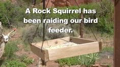 When this couple found a squirrel eating out of their bird feeder, they came up with a great plan to keep him out. What they did will make you laugh!