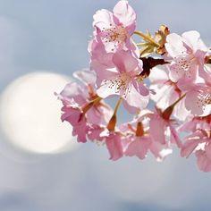 【smileoflily】さんのInstagramをピンしています。 《おはようございます😊 ・ ・ 寒くなりそうですが、素敵な週末をお過ごし下さいませ*ଯ( ॢᵕ꒶̮ᵕ)ॢഒ*♡ ・ Have  a  nice  weekend 😊💝 ・ ・ 2017.2.18 * * * #神奈川 #松田山ハーブガーデン  #河津桜 #cherryblossoms#flower  #ザ花部#はなまっぷ#wp_flower  #wp_まっぷ花まつり #whim_life  #tv_flowers #flowerstalking  #team_jp_ #Airy_pics #myheartinshots  #backyard_dreams #splendid_flowers #Flowers2sky #7flowers_1day #kings_flora  #rainbow_petals #9Vaga9 #_lovely_weekend #loves_garden  #superb_flowers #igscflowers  #magical_beauties…
