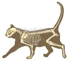 Signs Your Cat Is Healthy: Upper Body | nature | Pinterest | Anatomy ...