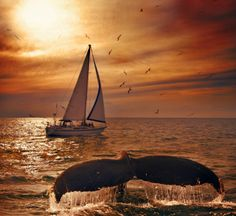 Sailing with whales.  My bucket list with a Twist