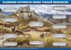 Planning pathways using takahē resources — PLD INTERACTIVE. These interactive resources are all about takahē as well as supporting year 12 biology assessment Trophic Level, History Articles, Environmental Factors, Go Outdoors, Compare And Contrast, Student Work, Pathways, Ecology