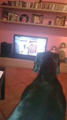 Also dobermann love breaking Bad