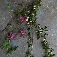 Image result for @firenzaflowers