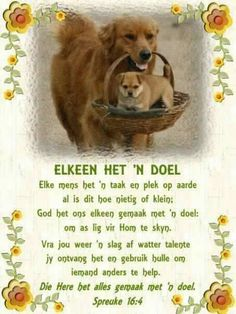 Bible Emergency Numbers, Afrikaans Quotes, God Is Good, Christianity, Amen, Wisdom, Words, Artist, Horse