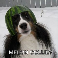 Well you would be too with a melon on your head! www.theballetbarrecompany.com