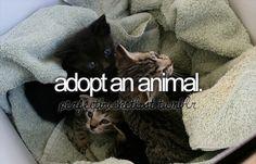 Adopt and save an abandoned animal.
