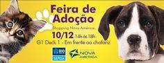 BONDE DA BARDOT: RJ: Adote um bichinho neste sábado, no Shopping Nova América (10/12)