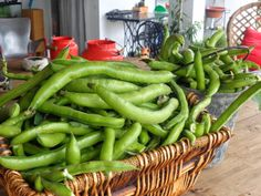 Fava Beans... Yes please!