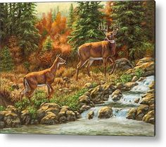 Whtetail Deer - Follow Me - Acrylic Print By Crista Forest