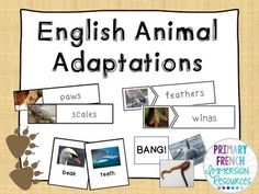 Starting to learn a language of choice can be amazing and exciting. We will discuss several of my recommended tips for Grade 2 Science, Keystone Species, French For Beginners, Animal Adaptations, Core French, Learn French, Social Studies, Language, Classroom