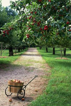 There's a fruit-bearing tree right in your own backyard.